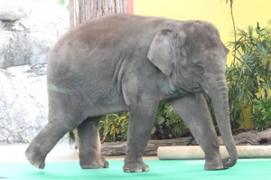 タイ ゾウ画像